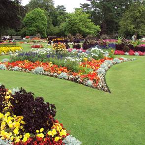 beautiful-garden-testimonial